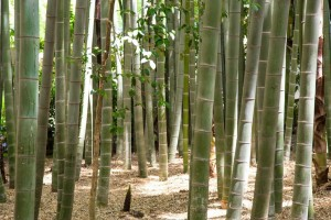 Tokijský bambusový háj