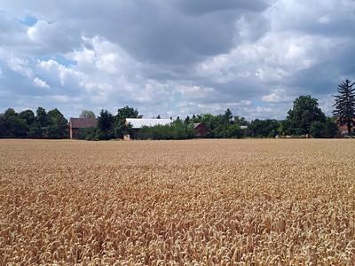 Prvky pro modelování struktury porostu ozimé pšenice před založením konkurence: studium meziprostorových variací mechanismu odnožování a vývoje listů
