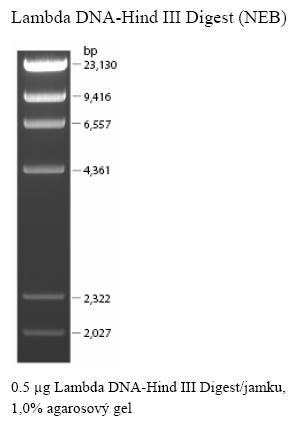 DNA žebříčky